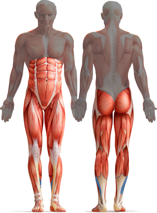 Core Strengthening For Runners – How It Really Works
